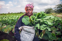 Exploration of sales channels for organic fertilisers for smallholders in Kenya