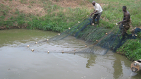 Utilization of wastewater to improve sanitation and food fish production, Ghana