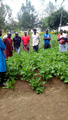 Farmer demonstrations on the use of bio-fertilisers